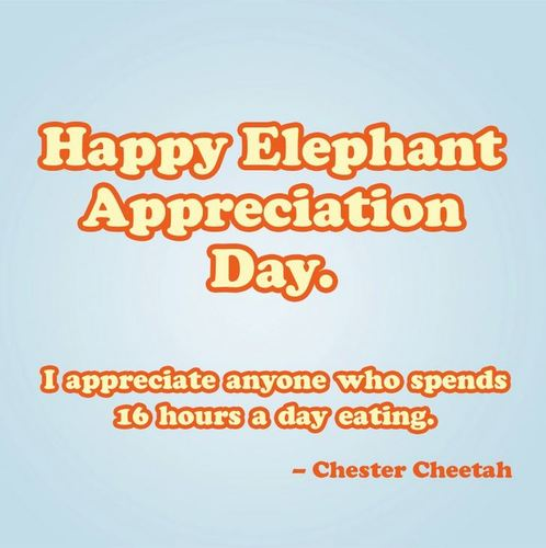 Happy Elephant Appreciation Day