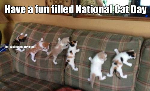 Have a fun filled National Cat Day