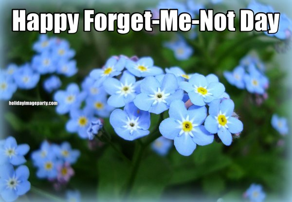 Happy Forget-Me-Not Day