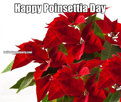 Happy Poinsettia Day