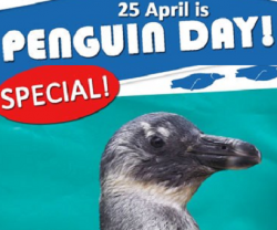 25 April is World Penguin Day!