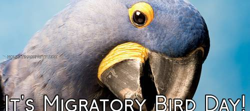 It's Migratory Bird Day!