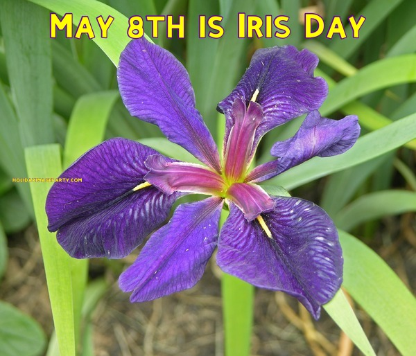 May 8th is Iris Day