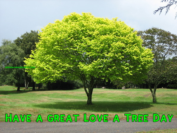 Have a great Love a Tree Day