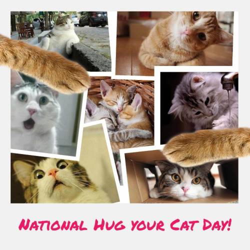 National Hug Your Cat Day!