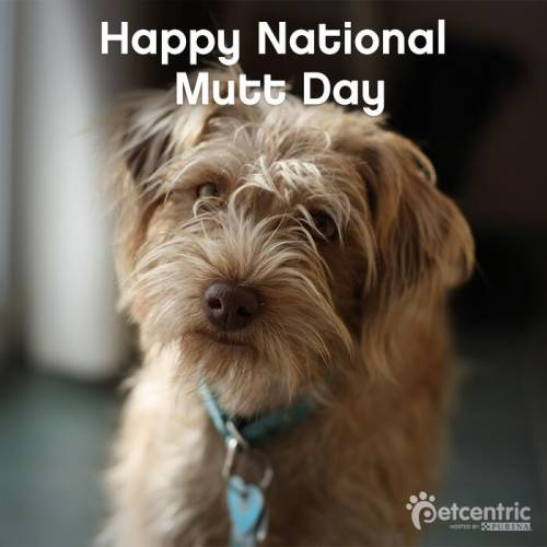 Happy National Mutt Day