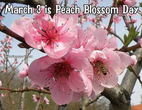 March 3 is Peach Blossom Day
