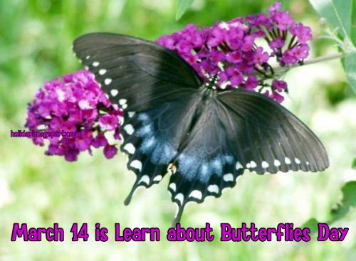March 14 is Learn about Butterflies Day