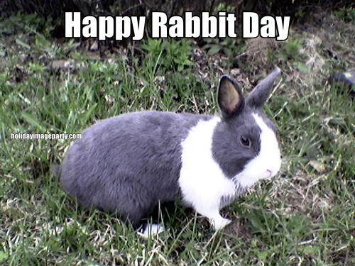 Happy Rabbit Day