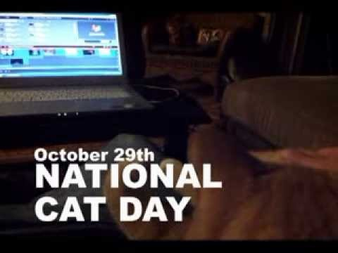 October 29th National Cat Day