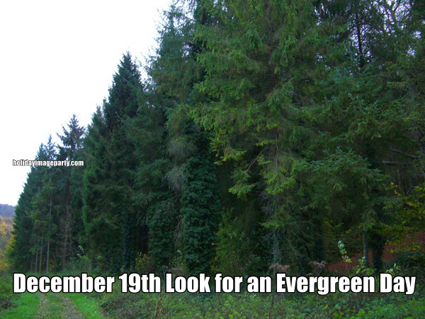 December 19th Look for an Evergreen Day