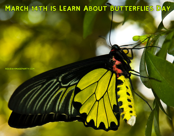 March 14th is Learn About Butterflies Day