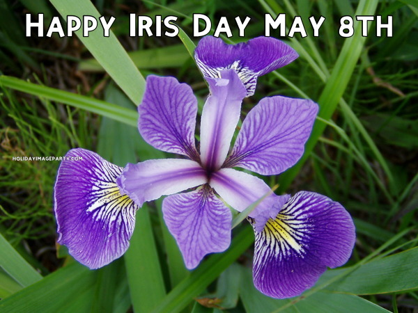Happy Iris Day May 8th