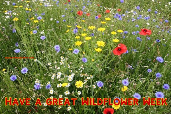 Have a great Wildflower Week