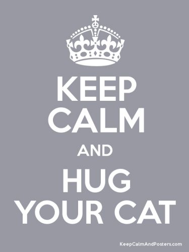 Keep calm and hug your cat