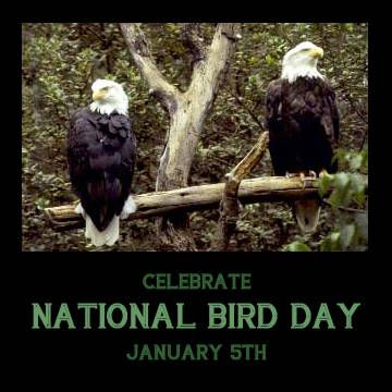 Celebrate National Bird Day January 5