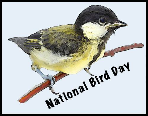 National Bird Day