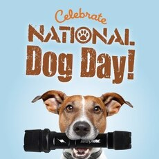 Celebrate National Dog Day