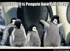 January 20 is Penguin Awareness Day!