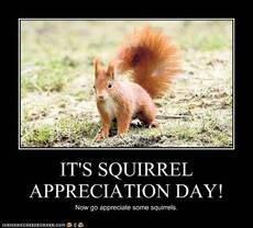 It's Squirrel Appreciation Day!