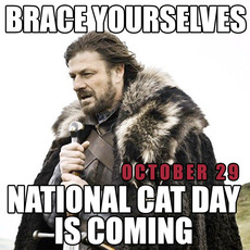 Brace yourselves National Cat Day is coming October 29