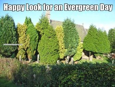 Happy Look for an Evergreen Day