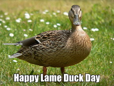 Happy Lame Duck Day