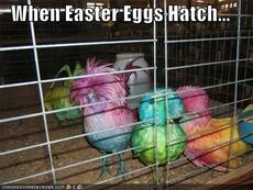 When Easter Eggs hatch...