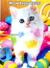 Meow Happy Easter