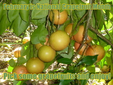 February is National Grapefruit Month Pick some grapefruits and enjoy!