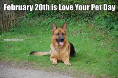 February 20th is Love Your Pet Day