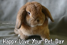 Happy Love Your Pet Day