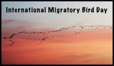 International Migratory Bird Day