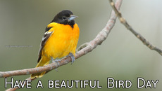 Have a beautiful Bird Day