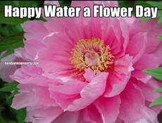 Happy Water a Flower Day