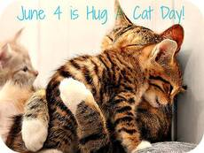 June 4 is hug a cat day!