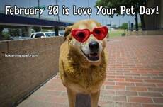 February 20 is Love Your Pet Day!