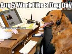 Aug 5 Work Like a Dog Day