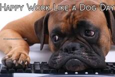 Happy Work Like a Dog Day