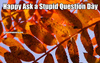 Search ask a stupid question day
